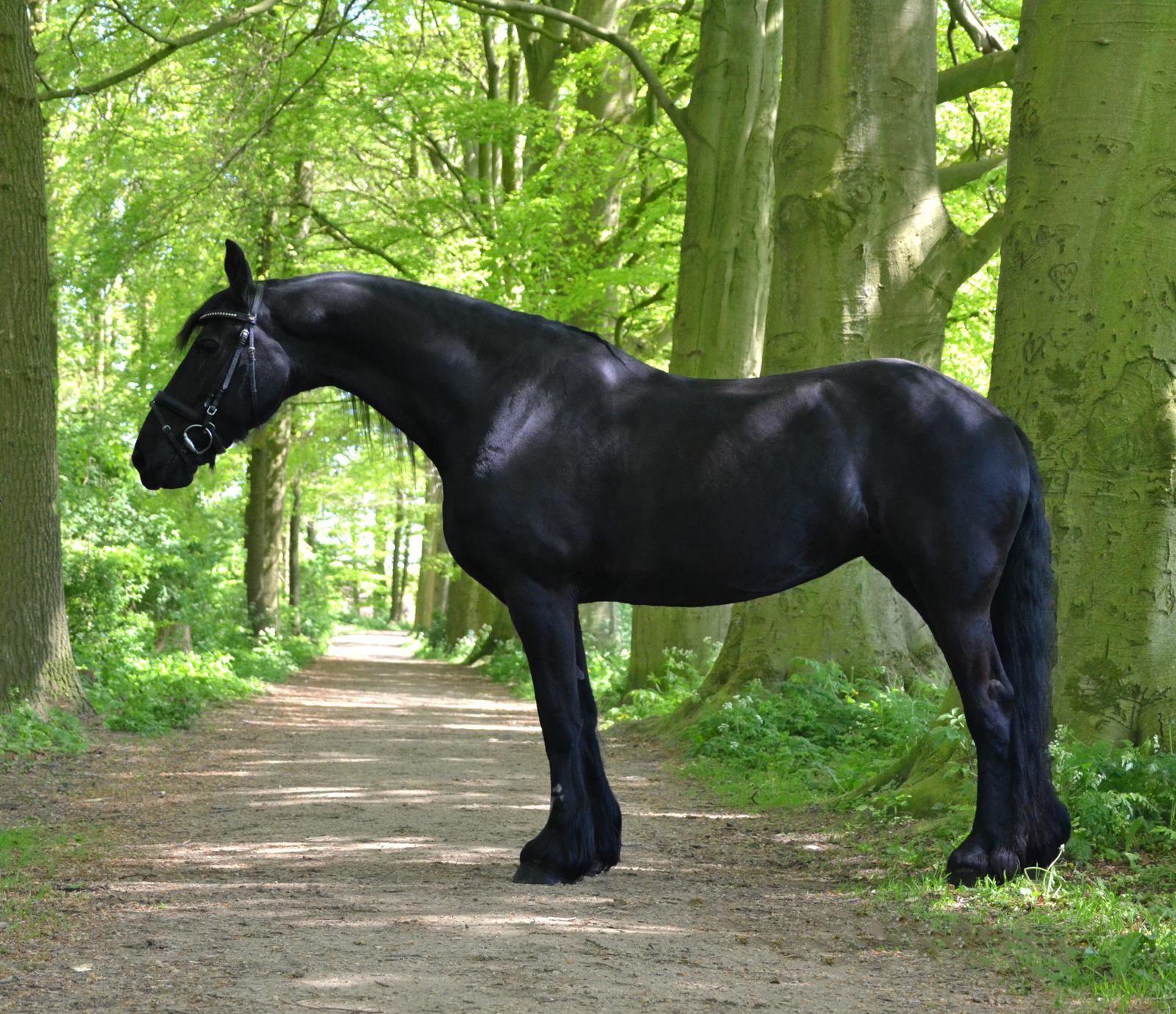 Paarden Hoefijzers Kleurplaten.Nieuws T Hoefijzer